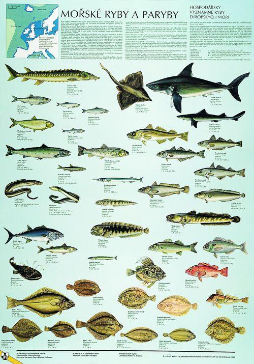 Mořské ryby a paryby