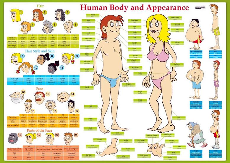 Human Body and Appearance - karta