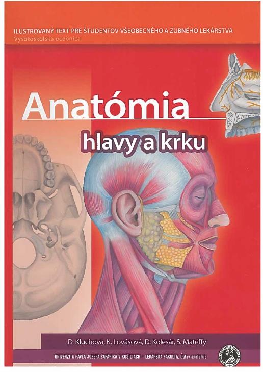 Anatómia hlavy a krku