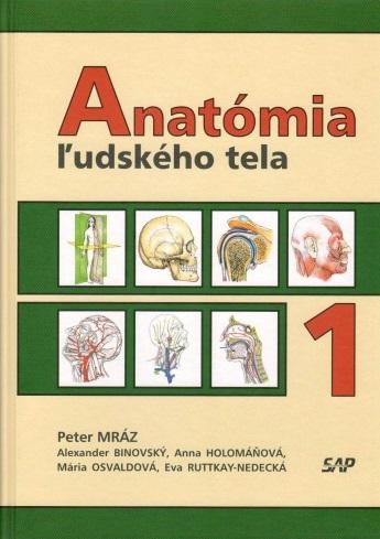 Anatómia ľudského tela 1
